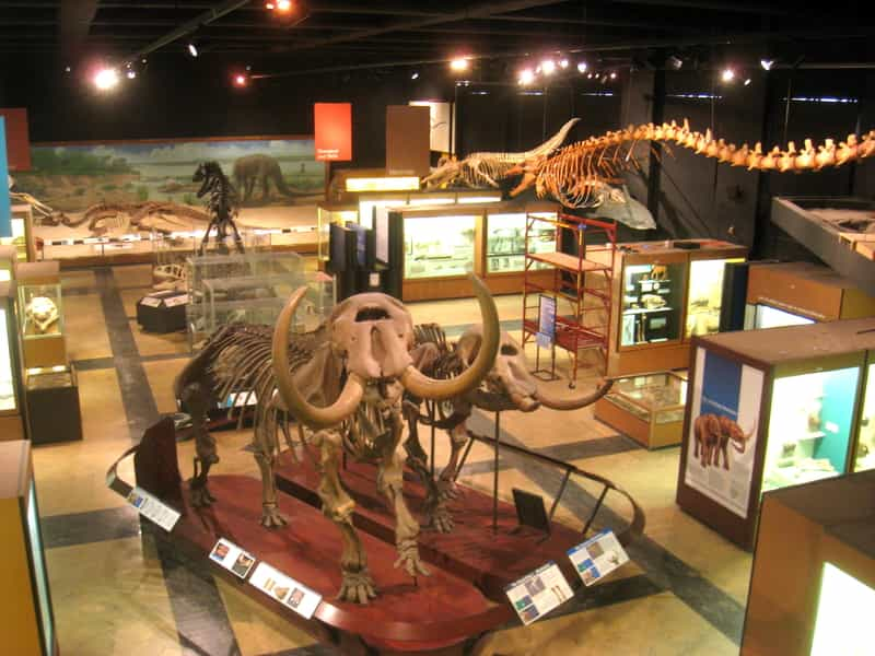 Exhibits at the Regional Museum of Natural History