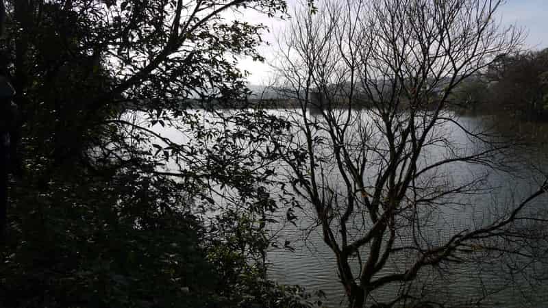 Enjoy scenic views of the Tapola lake