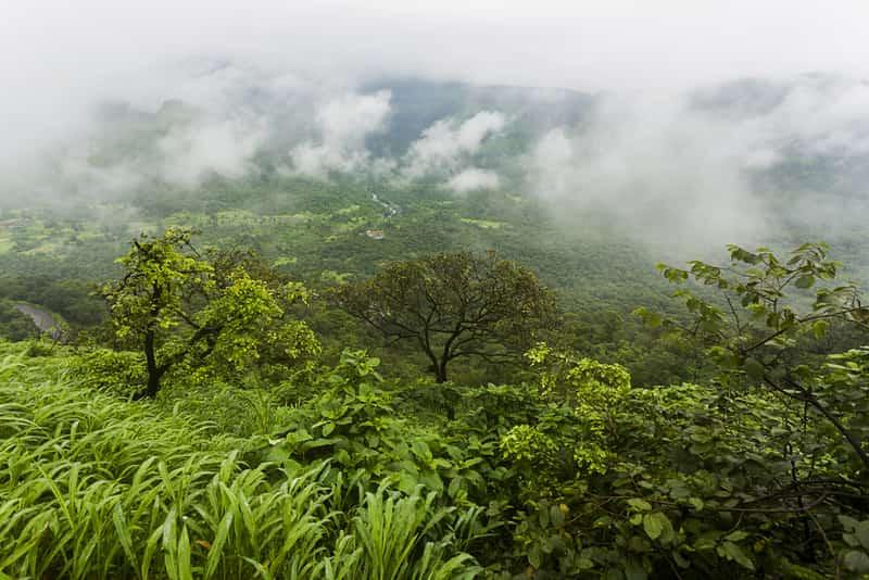 The misty green forest in Malshej Ghat