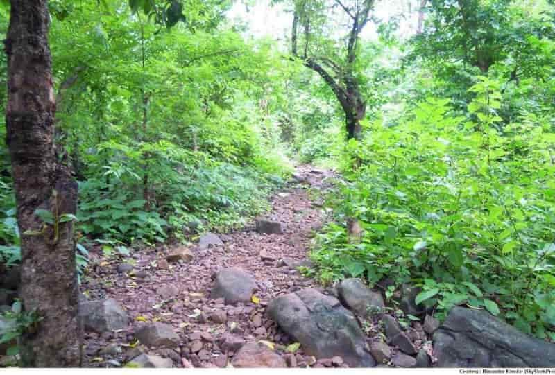 Trekking trail at Chinchoti