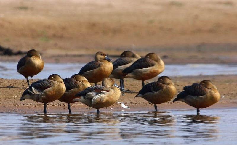 Bird Watching at Chambal River