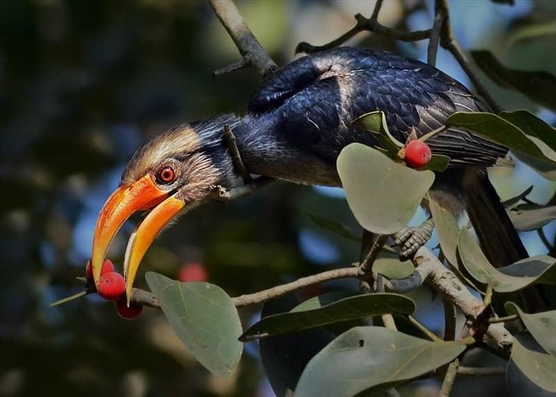 Dandeli Bird Sanctuary