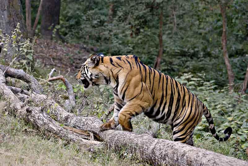 Mahavir Harina Vasnasthali National Park