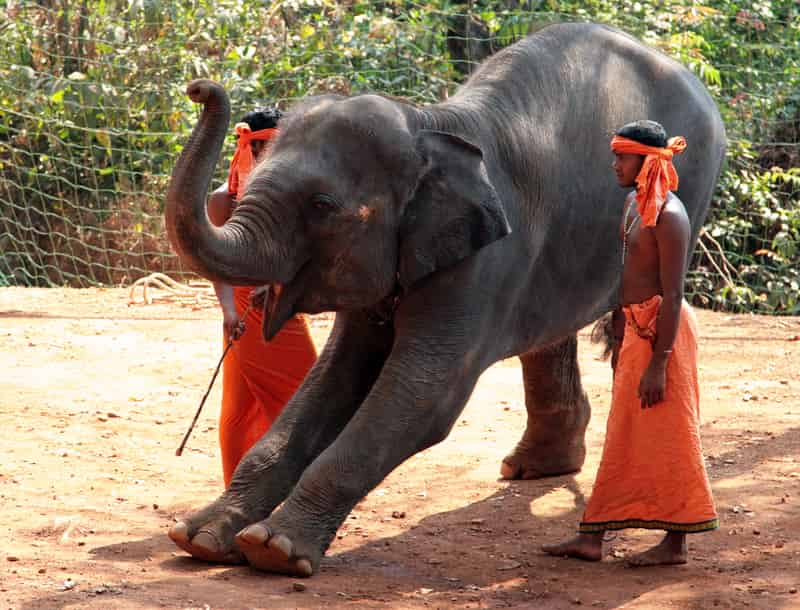 Take an Elephant Ride