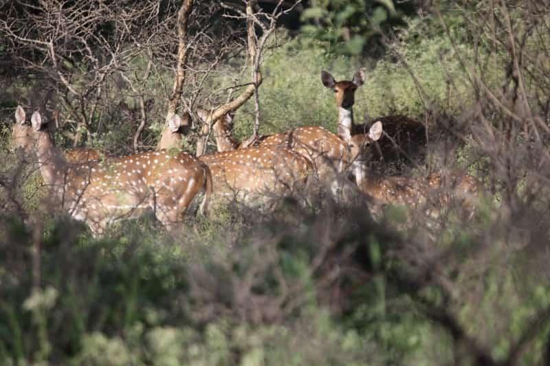 The Sagareshwar Deer Park is India's only man-made deer park