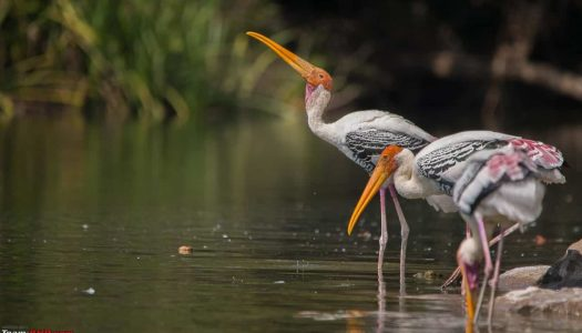 19 Must Visit Bird Sanctuary in Bangalore