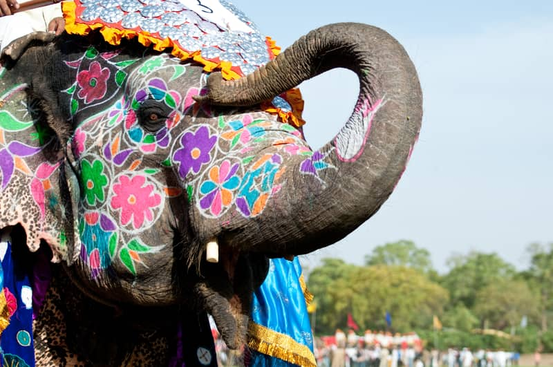 A painted elephant at the Elephant Festival