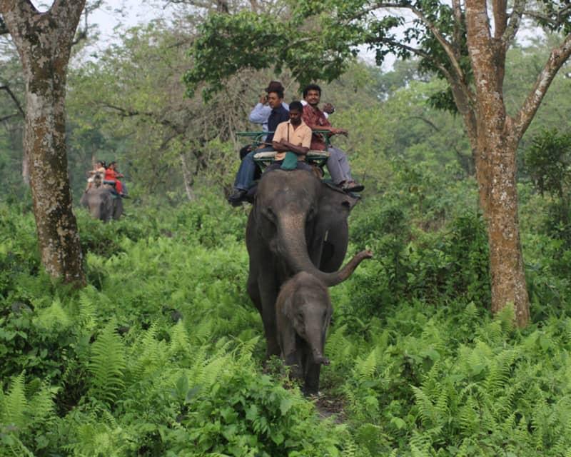 The Jaldapara Wildlife Sanctuary
