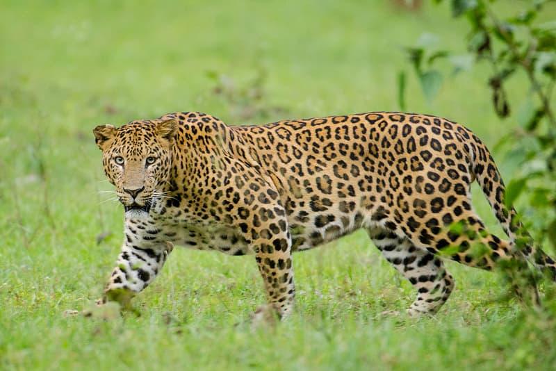 Kalesar Wildlife Sanctuary