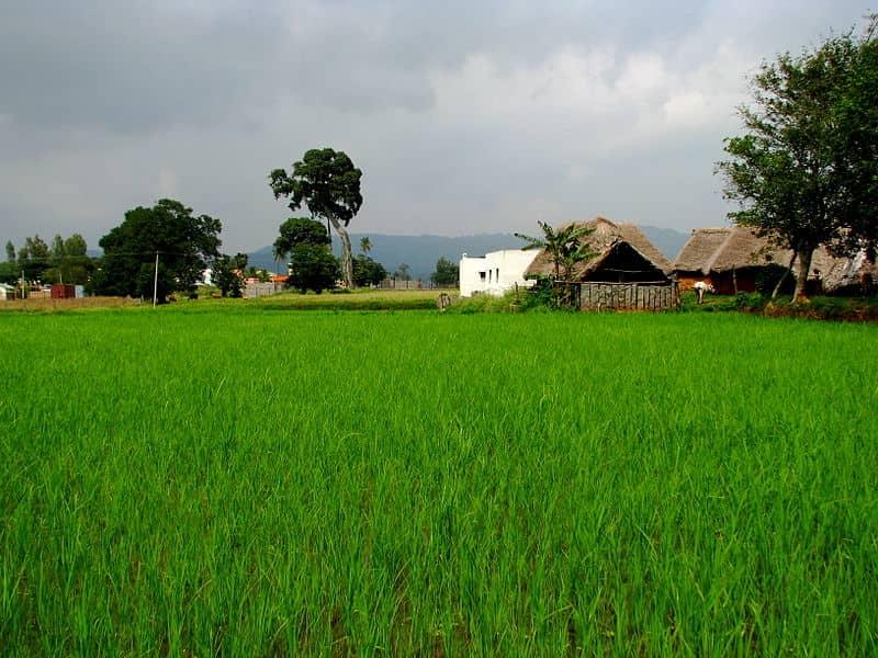 Yelagiri Hills