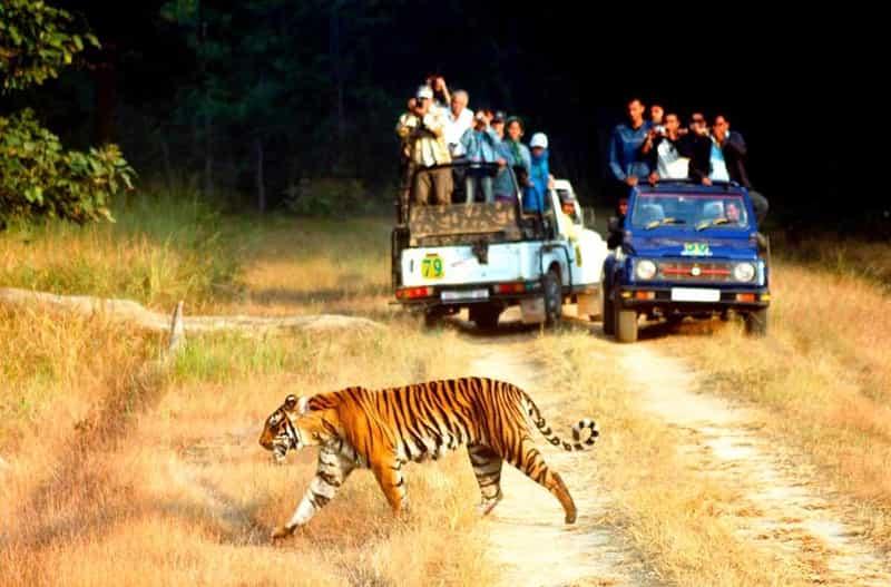 Tourists on a wildlife safari