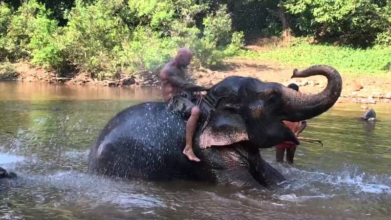 An elephant spraying water on of its washers