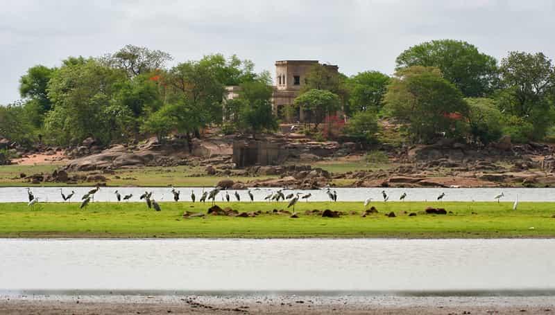 Birds at the Pocharam Wildlife Sanctuary