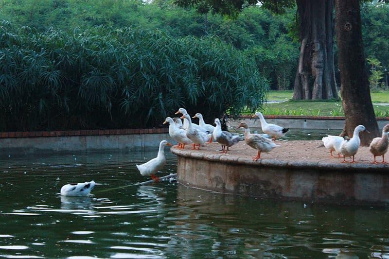 Birds frolicking at Semmozhi Poonga