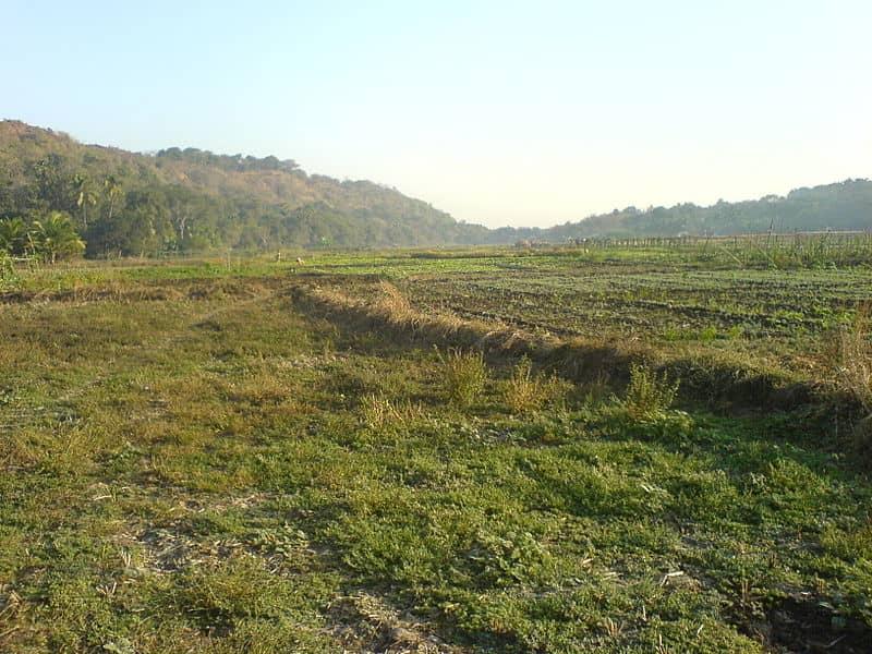 Green fields at Uttan