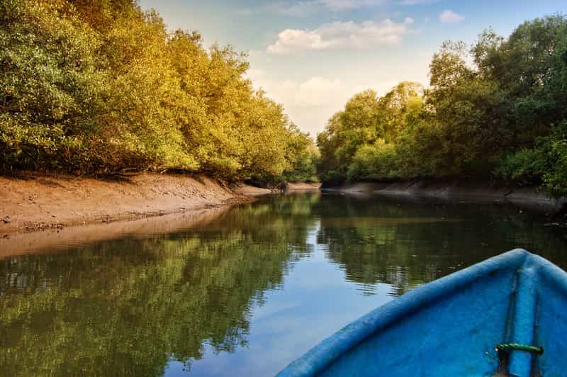 Kayaking through the Mangrove Forests at Dr. Salim Ali Bird Sanctuary