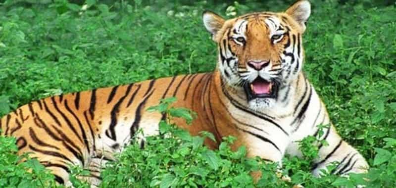 Kinnerasani Wildlife Sanctuary, Khammam