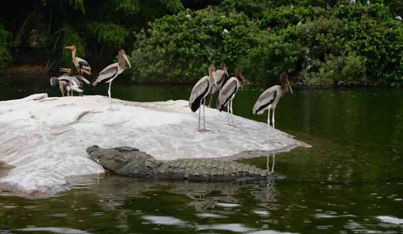 Light Rain At Ranganathittu Bird Sanctuary