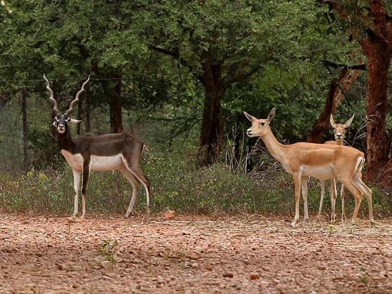 Mrigavani Wildlife Park, Chilkur