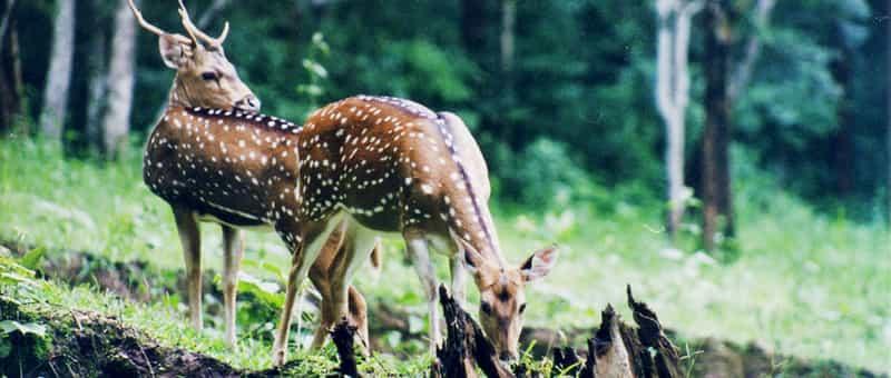 Pakhal Wildlife Sanctuary, Warangal
