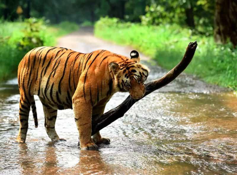 The Nagarjunasagar Wildlife Sanctuary
