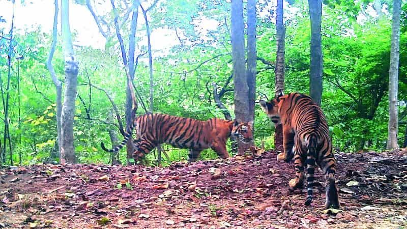 The Nagarjunsagar-Srisailam Tiger Reserve