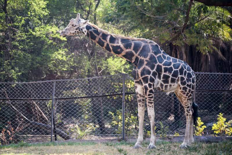 The Nehru Zoological Park, Hyderabad