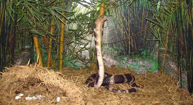 The Snake Park at Chennai