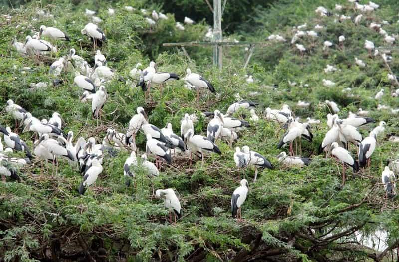 Uppalapadu Bird Sanctuary, Uppalapadu