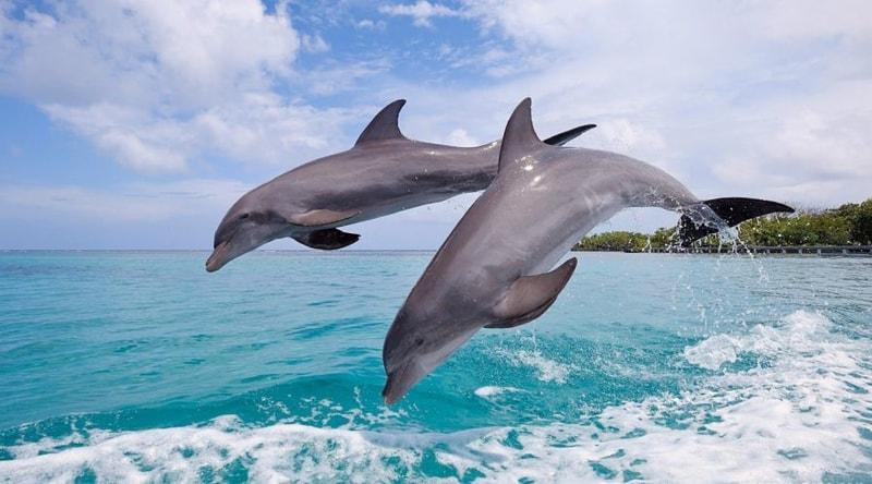 Visitors enjoying spotting the Dolphins