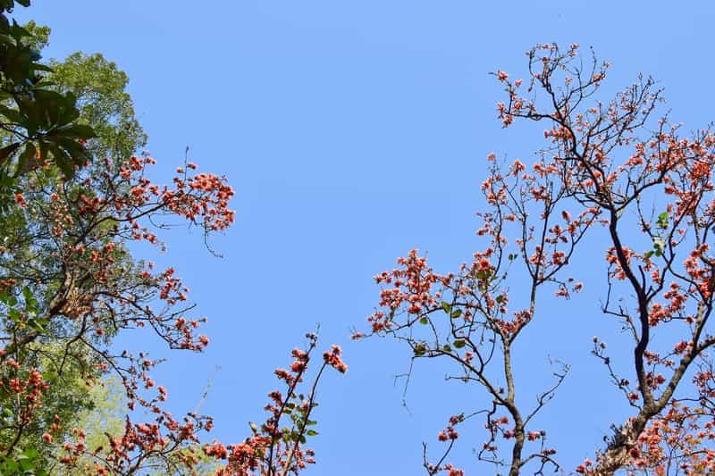 Botanical Garden at Shibpur