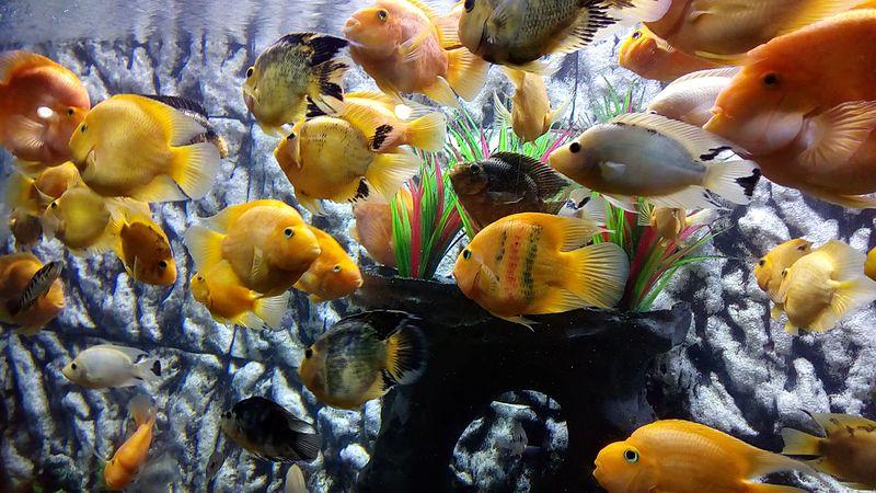 Colourful fish at the aquarium