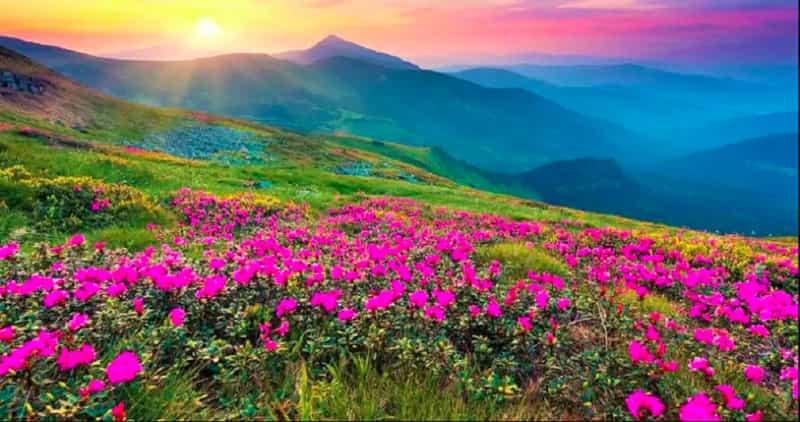 Endemic alpine flowers
