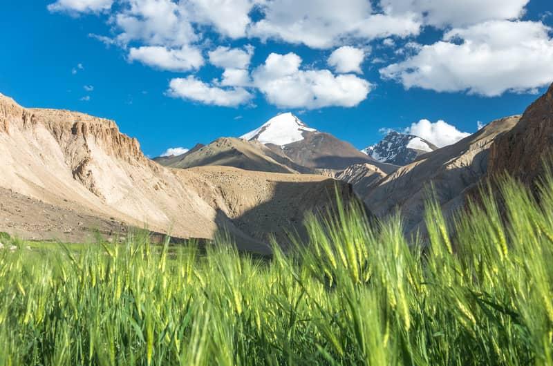 Markha Valley Trek boasts of rolling hills
