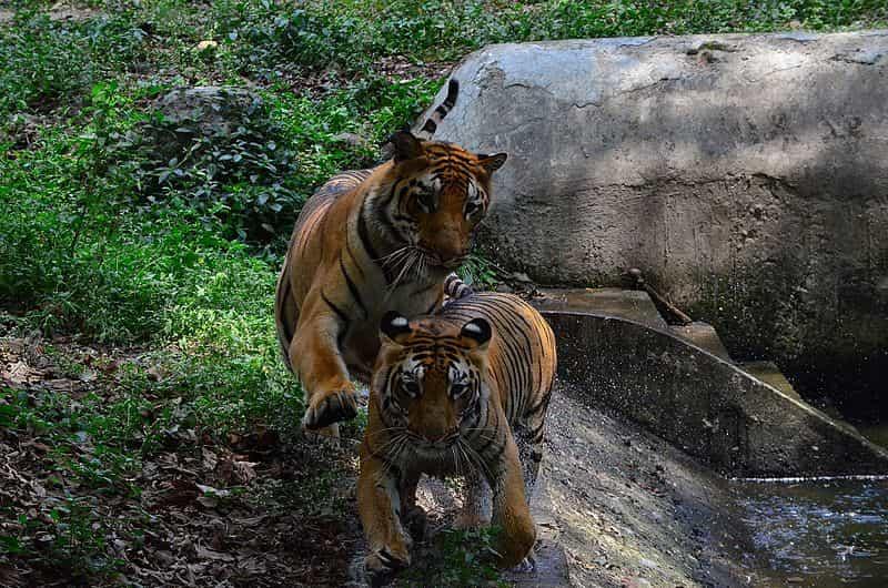 Take a wildlife safari in Jamshedpur