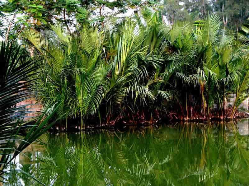 Taki Golpata Forest
