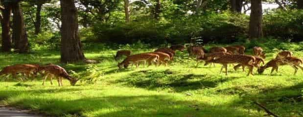 The Mukutmanipur Deer Park
