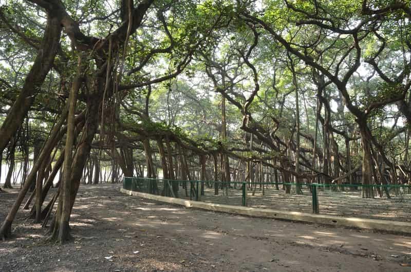 Acharya JC Bose Botanical Garden