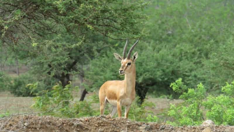 Jamwa Ramgarh Wildlife Sanctuary