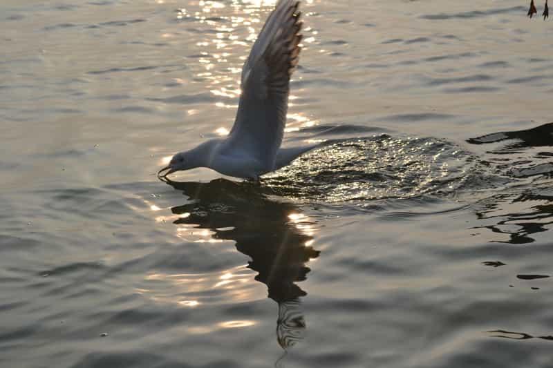 Bird at Nal Sarovar