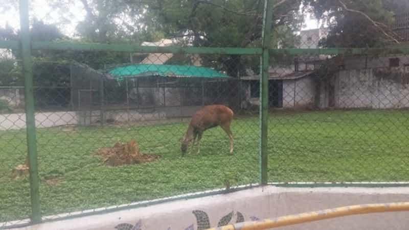Spot Deer at the Rasala Nature Park