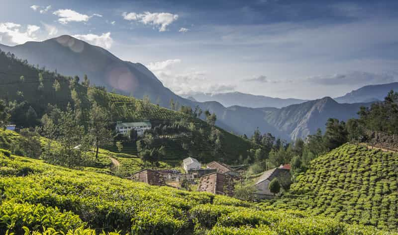 Tea Garden in Kolukkumalai