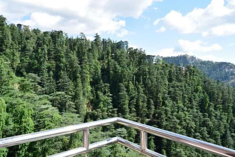 Kiala Forest