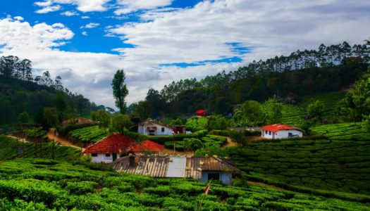 8 Places to Visit in Munnar for a Memorable Trip