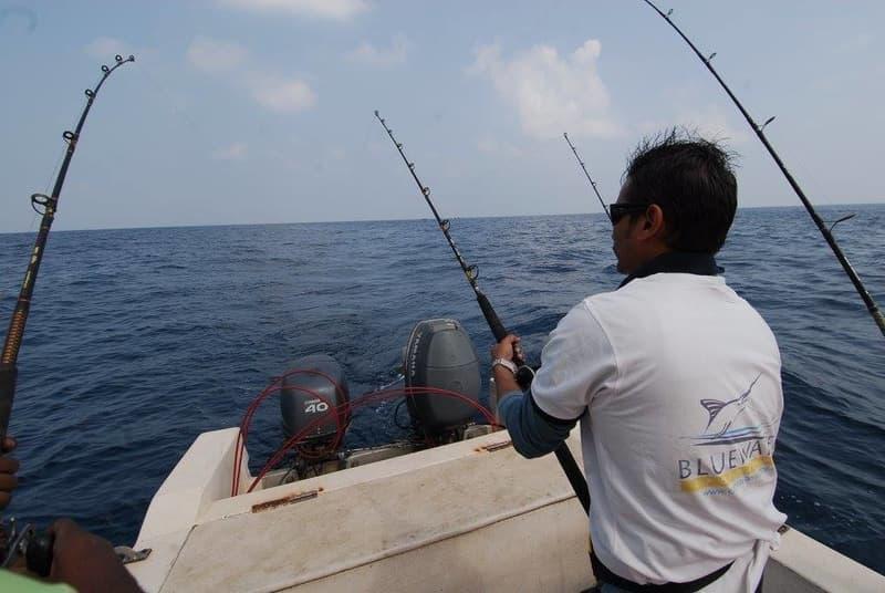 Barracuda Bay