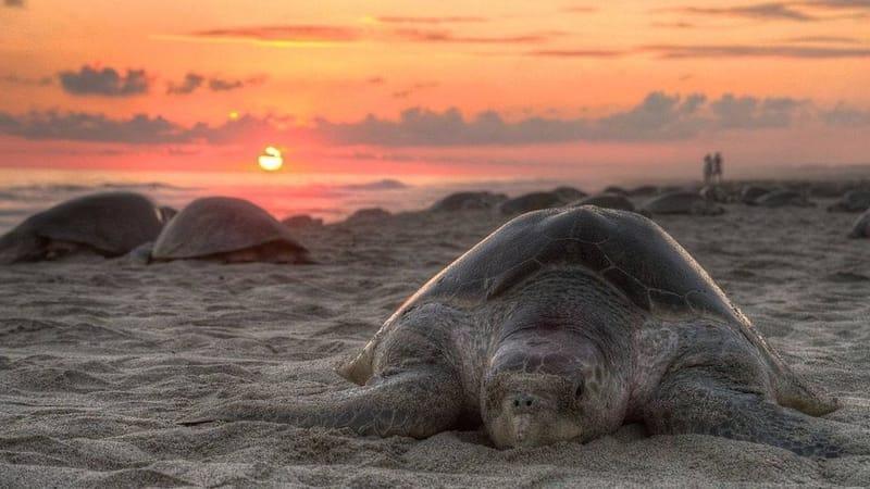 Turtle Walk