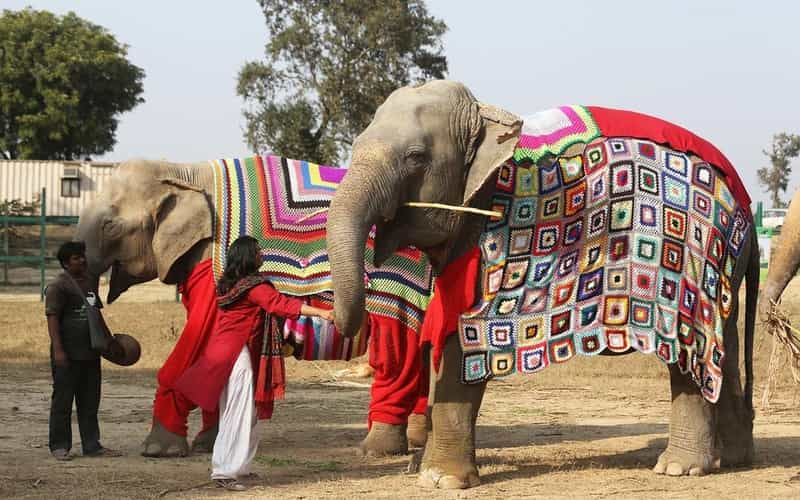 Elephant Conservation & Care Centre