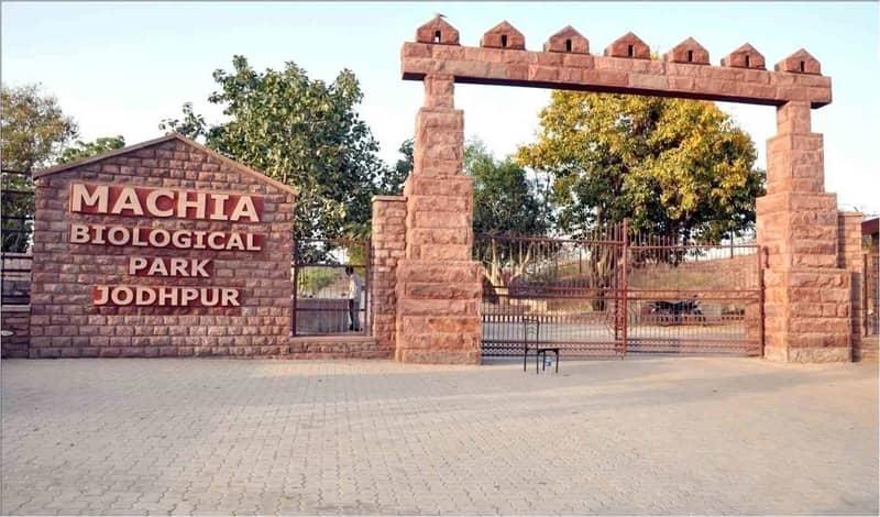 Machiya Zoological Park, Jodhpur