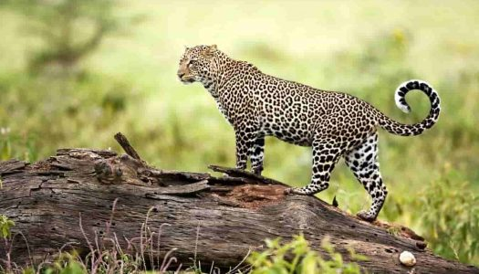 Famous Wildlife Sanctuaries in India – Experience Wildlife like Never Before