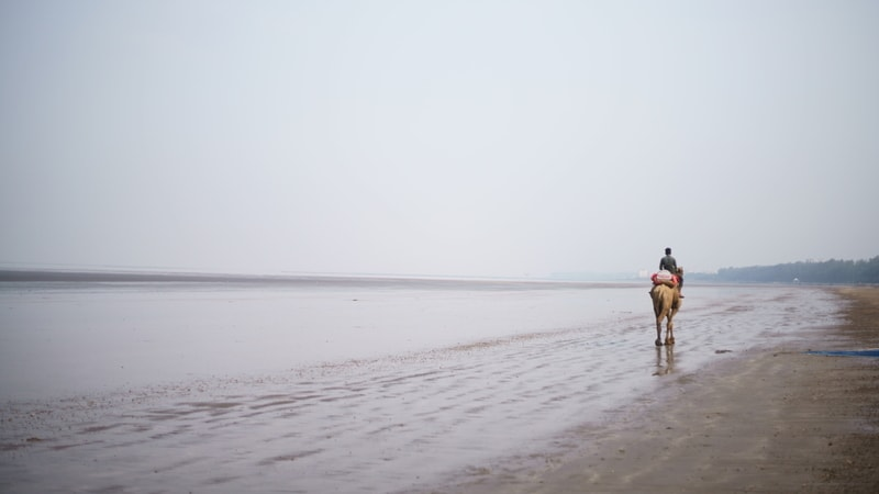 While in Daman, enjoy a camel ride on the Jampore Beach